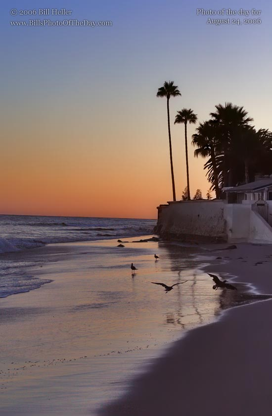 Sea Gulls playing in the surf at sunset on Butterfly Beach in Santa Barbara