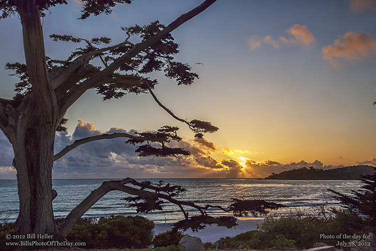 Cypress on the beach in Carmel by the Sea, California