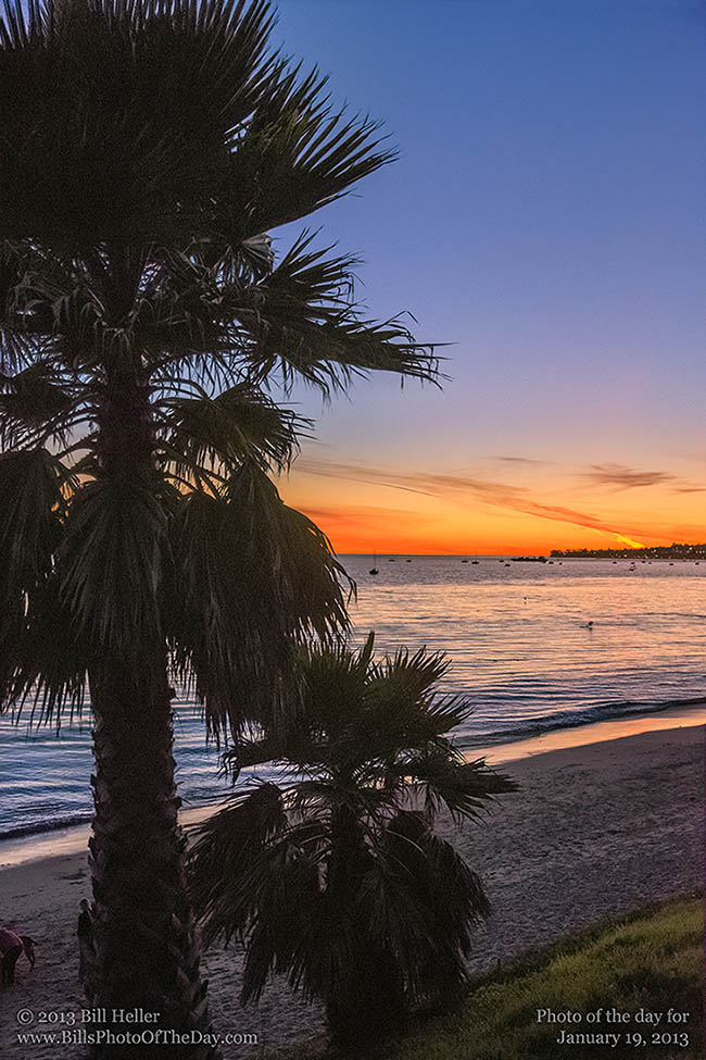 Sunset behind the palm trees along Butterfly Beach