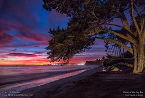 Wednesday, December 9, 2015 - Cypress Twilight