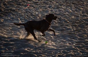 Tuesday, December 3, 2019 - Beach Retriever