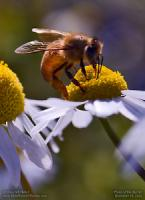 Wednesday, December 18, 2019 - Daisy Worker Bee